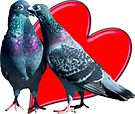 love birds by Sara Sadler