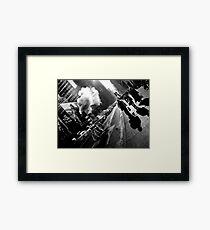 5th Ave. Framed Print
