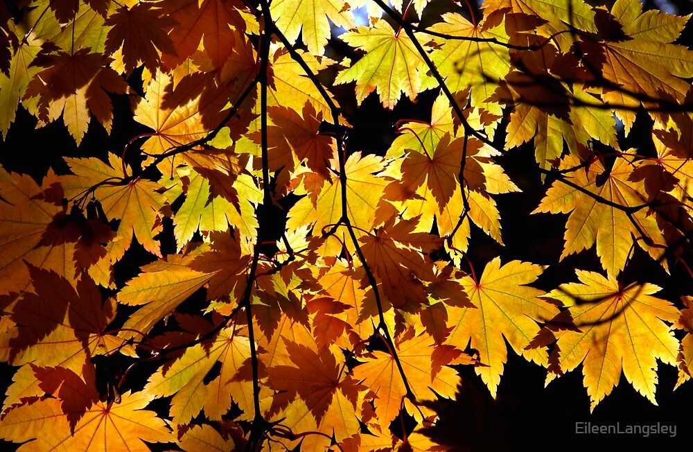 Autumn glory by EileenLangsley