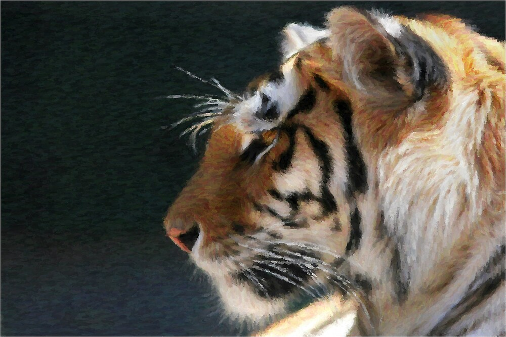 Bengal Tiger by Ganz