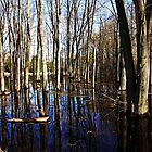 Spring At The Pond by Debbie Oppermann