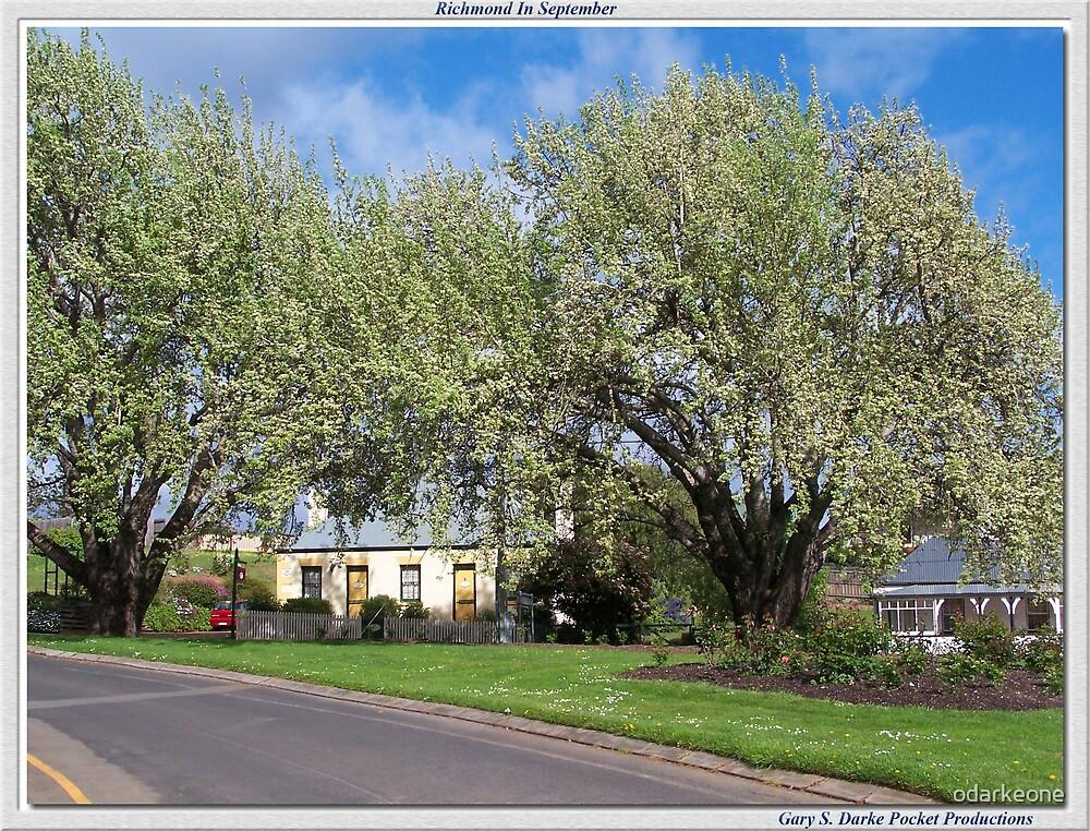Richmond Trees Framed by odarkeone