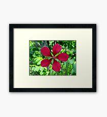 Big Red Flower Framed Print