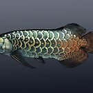 Asian Arowana - dark background by rah-bop