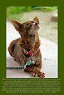 A dogs prayer- Johnny Canelo Praying  by Larry Costales