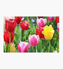 Pick A Color Photographic Print