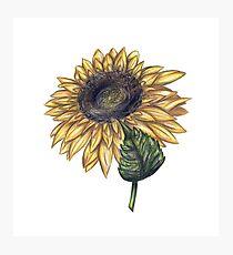 Single Sunflower Photographic Print