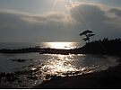 Sunshine on Tateishi Beach by Mui-Ling Teh