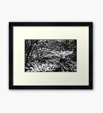 Snowy Tree Ferns.....Cradle Mountain National Park Framed Print