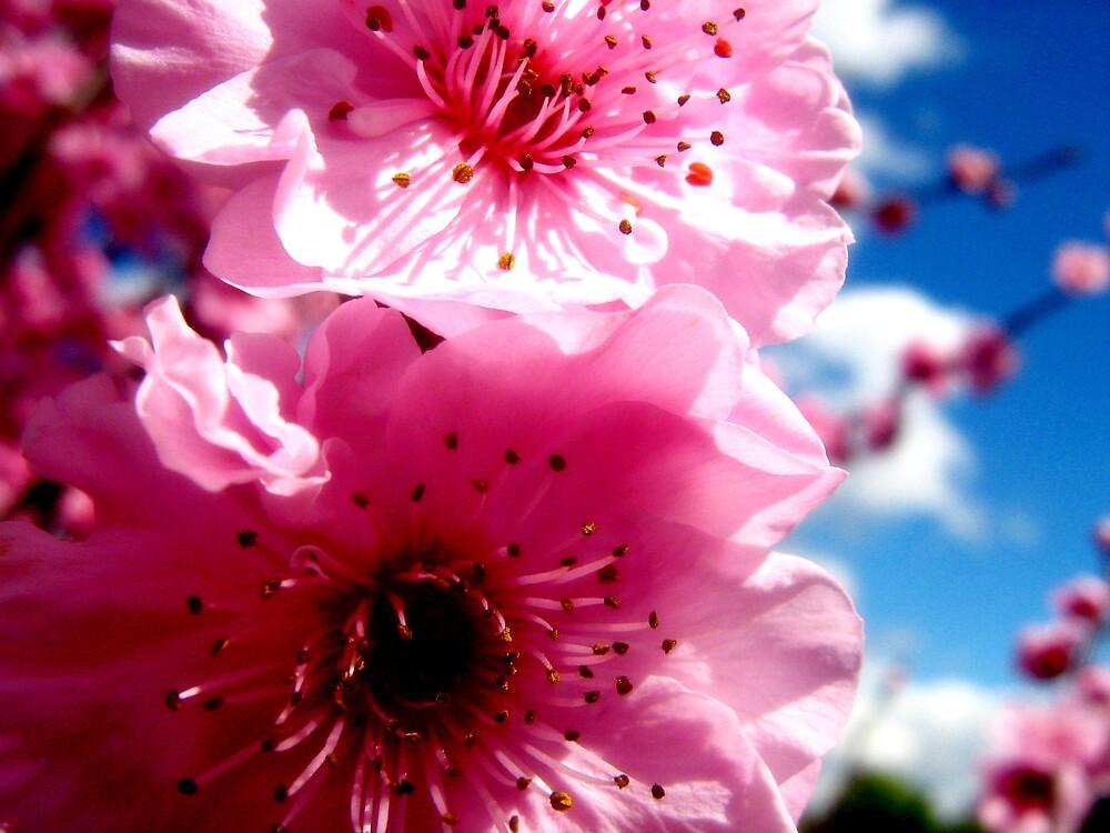 blossom by SherryAnn