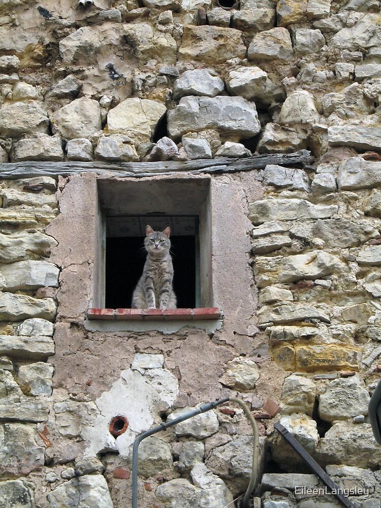 Neighbourhood Watch by EileenLangsley