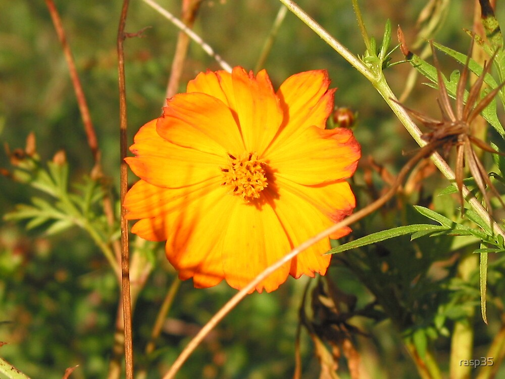 Flower in the Glow of Sunset by rasp35