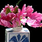 Hot Pink Parrot Tulips by AngieDavies