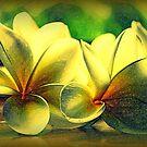 Painted Frangipanis - Still Life by Evita