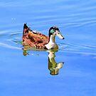 Ente reflektiert von Evita
