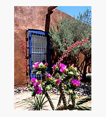 Mesilla Cholla Photographic Print