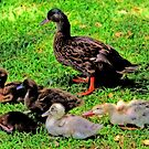 Das Familienporträt der Ente von Evita
