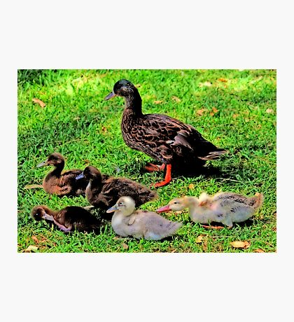 The Duck's Family Portrait Photographic Print