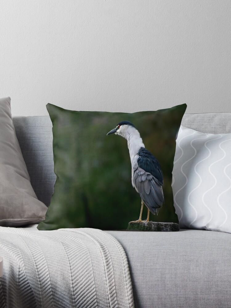 Black-Crowned Night Heron by Jonicool