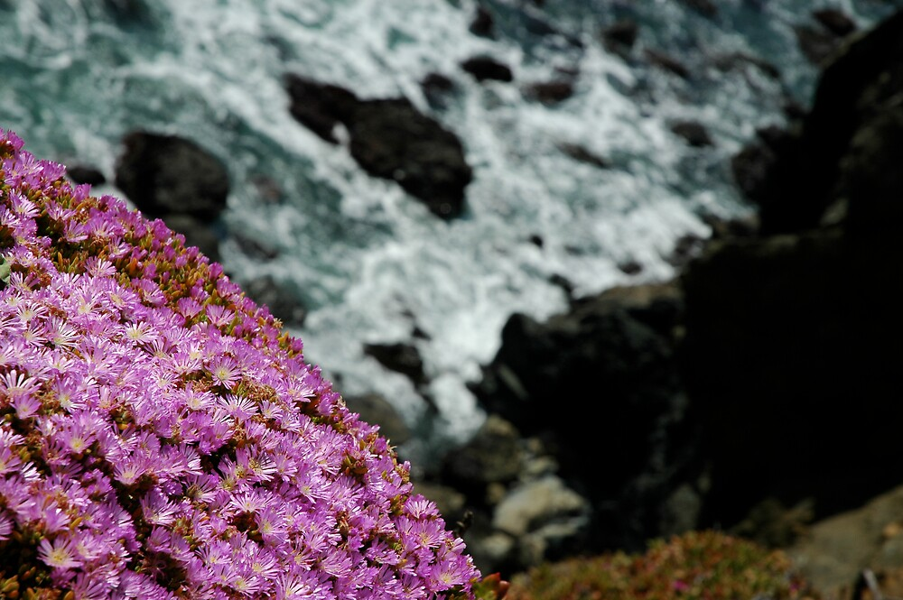 Ice Plant by Paul Franson