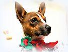 Weihnachten Kudlz von Evita