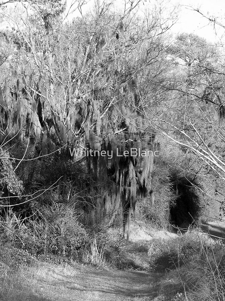 my little rabbit hole...... by Whitney LeBlanc