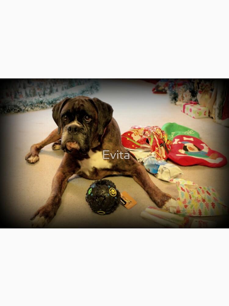 Ist das ein anderes Weihnachtsgeschenk für mich? - Boxer-Hunde-Reihe von Evita