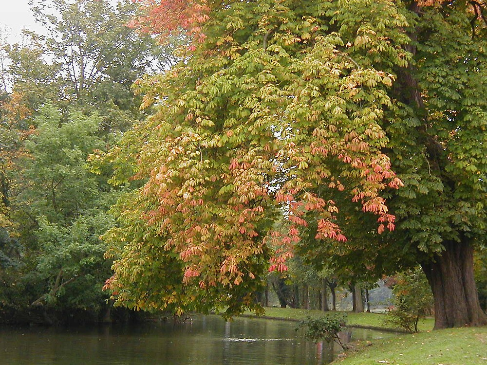Autumn horse-chestnut by megankerr