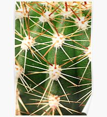 A close up image of cactus spines Poster
