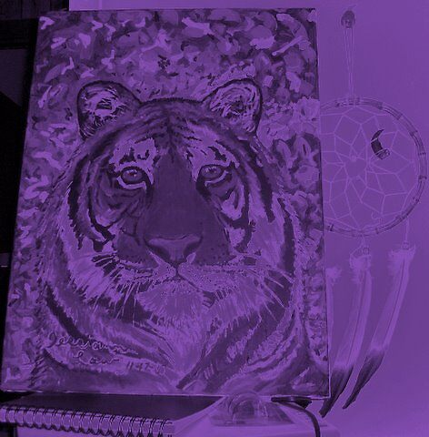 tiger in the purple shade by Jerriann