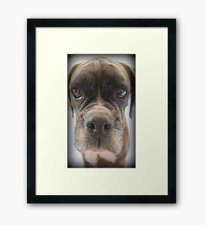 Gibt es Choc Cookies in dort? - Boxer-Hunde-Reihe Gerahmter Kunstdruck