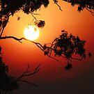 Feuriger Sonnenaufgang von Evita