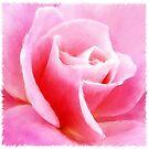 pink rose by Edith Krueger-Nye