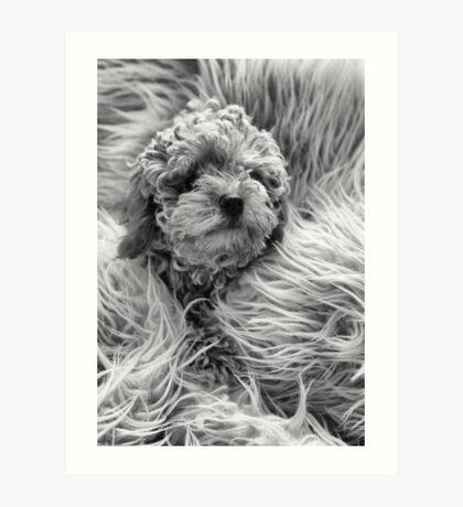 Spot the Dog Art Print