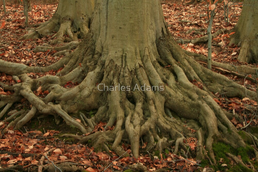 Bare Roots by Charles Adams