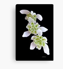 Marching Snow Drops Canvas Print