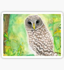 Barred Owlet Sticker