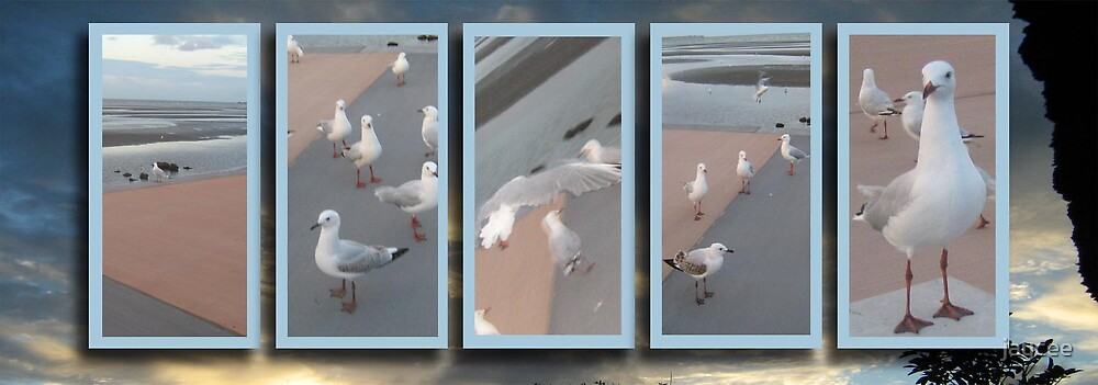 Seagulls at Sandgate series 5 by jaycee