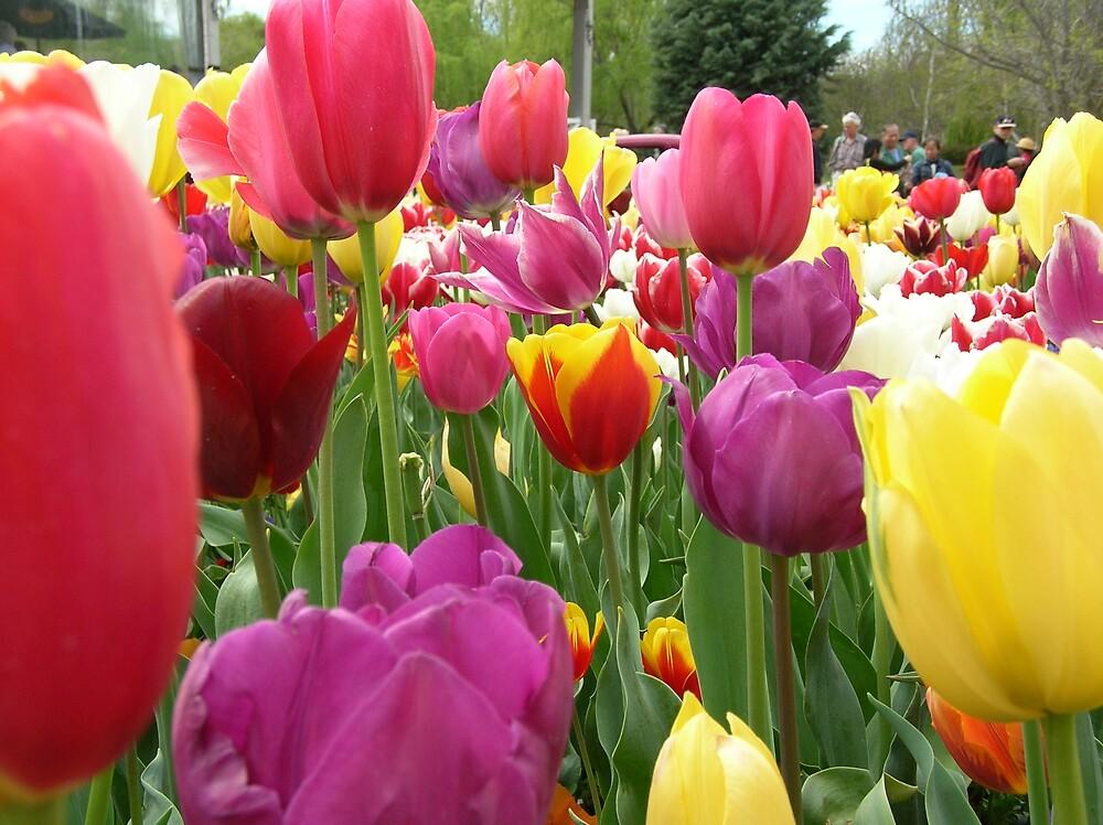 Tulips by Bouzov
