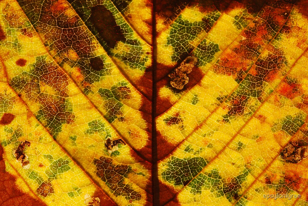 Fall colors by epsylonlyrae