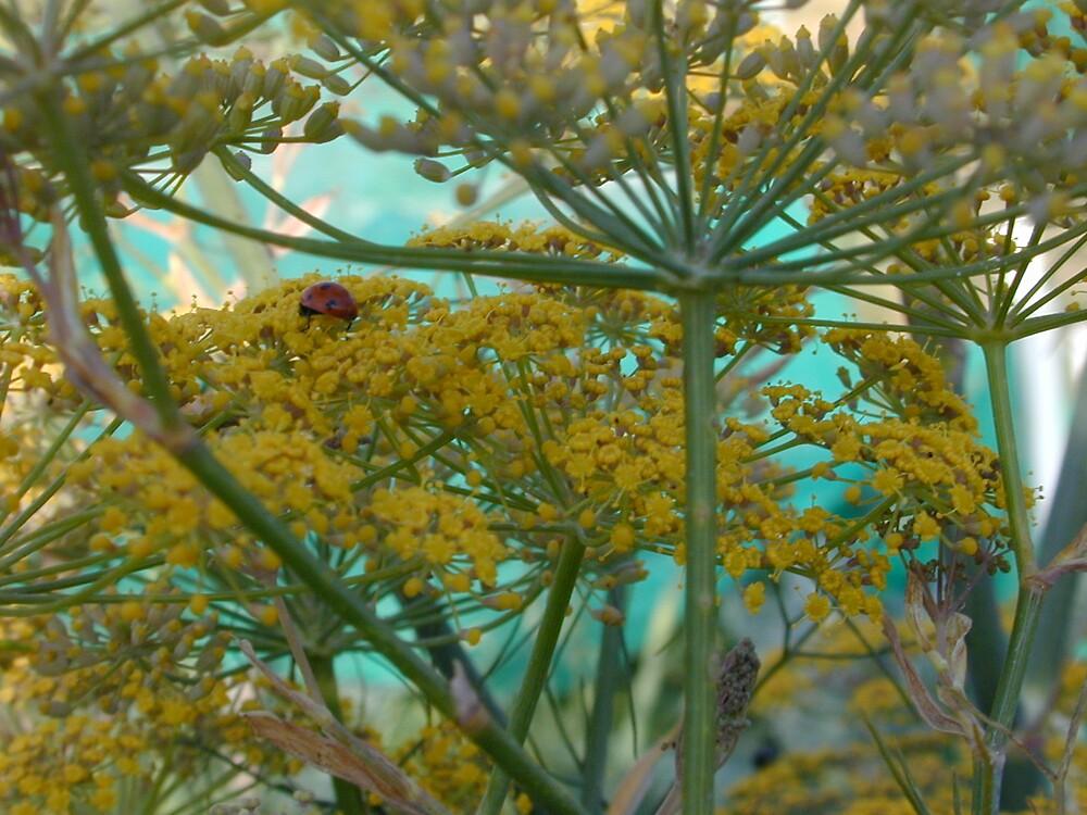 ladybird ladybird by tilly