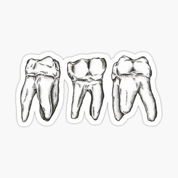 Molars Sticker