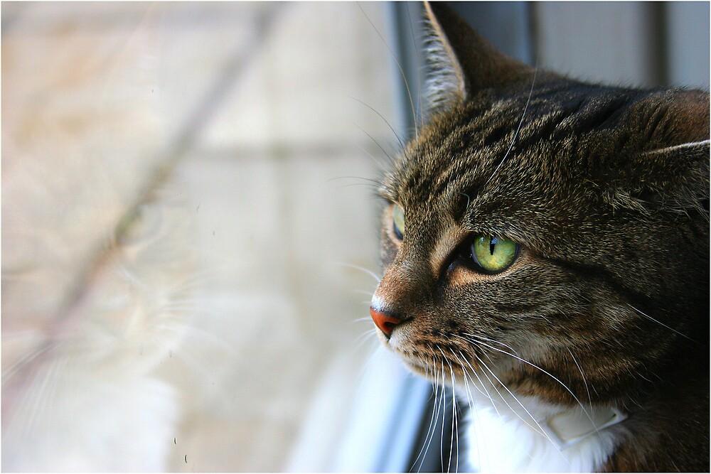 Pet Reflection by AlexClark