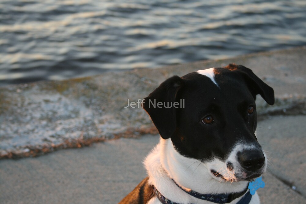 Religion is a Smile On a Dog by Jeff Newell