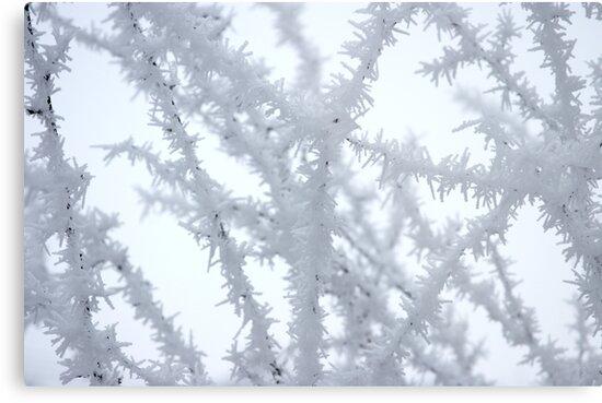 Winter 3 by Dóra  Varga Lencsés