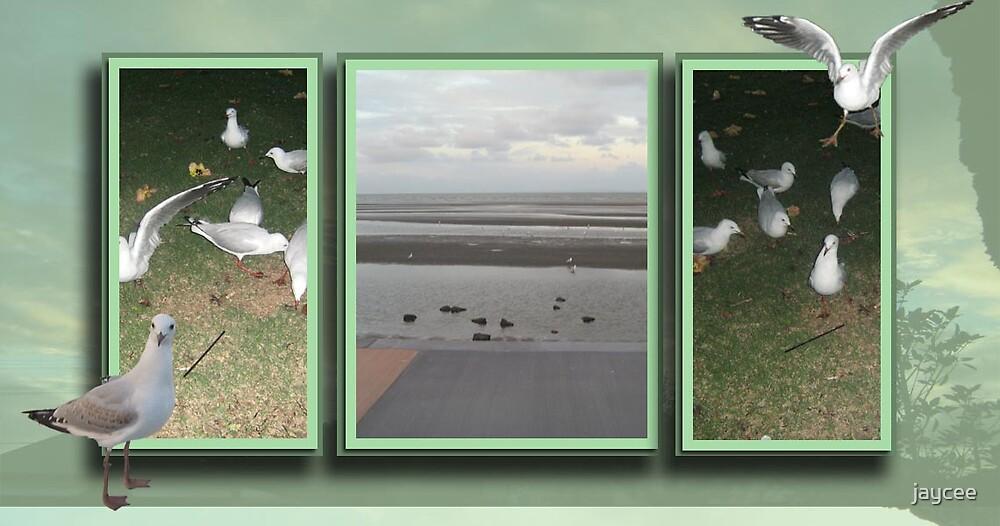 Sandgate Seagulls by jaycee