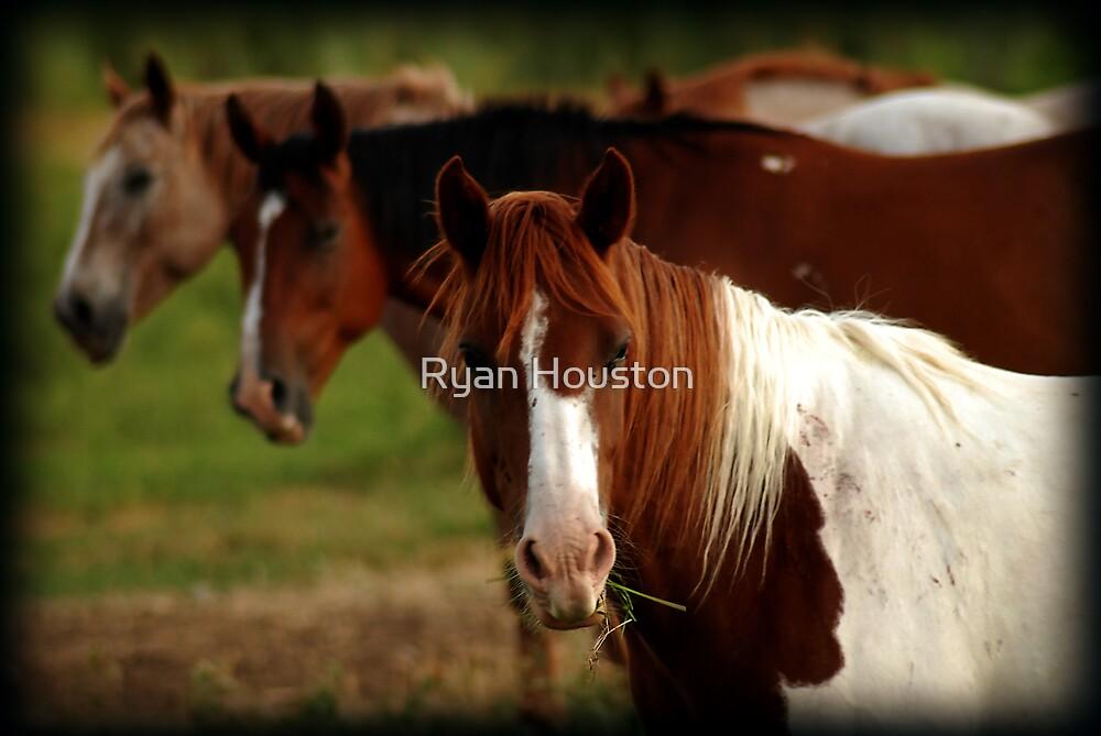 Tic-Tac-Toe Horses by Ryan Houston