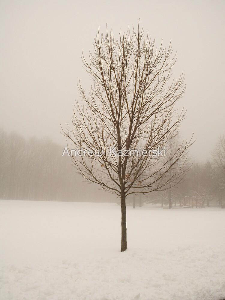 Tree in Mist by andykazie