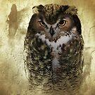 Owl by CarolM