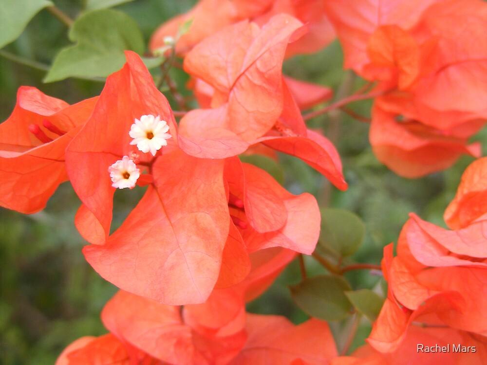 Flowers by Rachel Mars